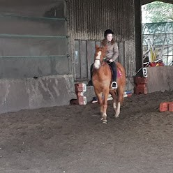 naomi horse